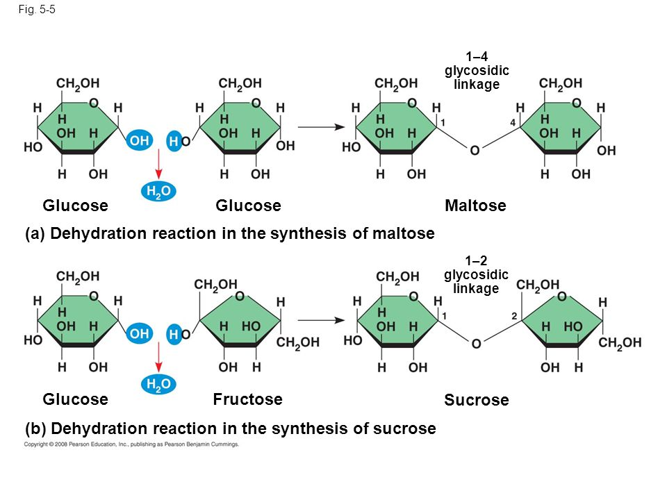 dehydration synthesis Dehydration synthesis refers to the type of reaction wherein some chemical compounds are formed at the cost of losing water molecules from the reacting substances.