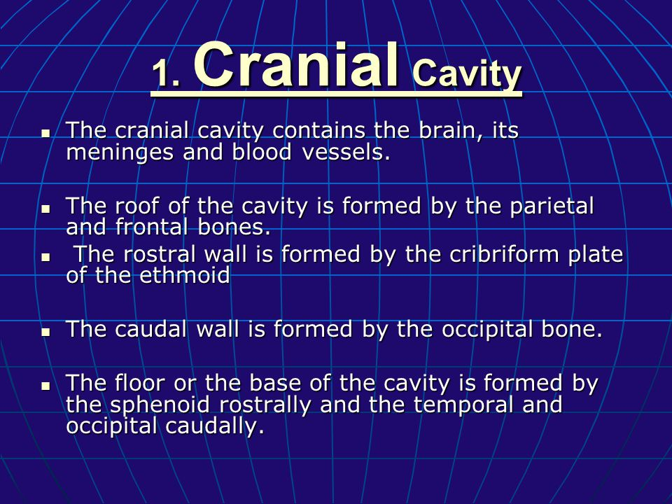 lecture 5 skull. - ppt video online download, Human Body