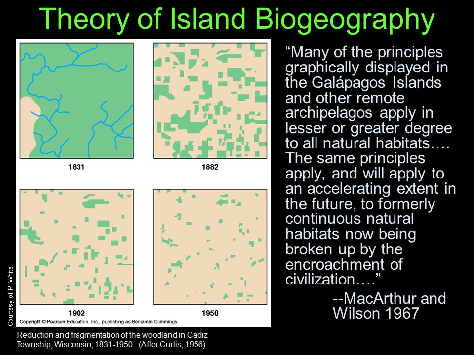 Fragmentation and the Role of the Matrix in Species Richness - ppt ...
