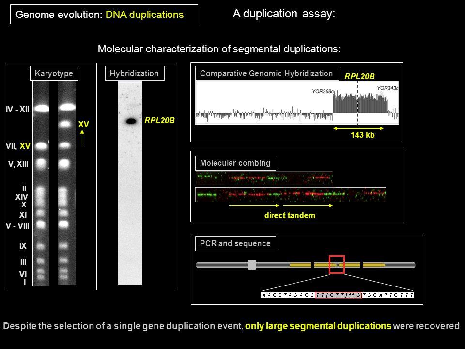 Molecular characterization of segmental duplications: