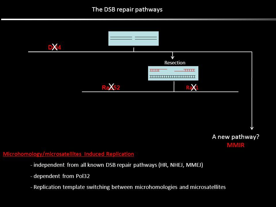 The DSB repair pathways