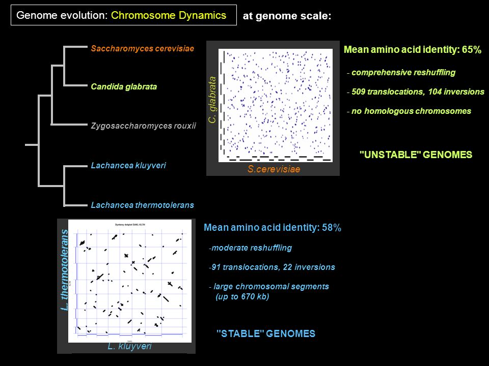Genome evolution: Chromosome Dynamics at genome scale: