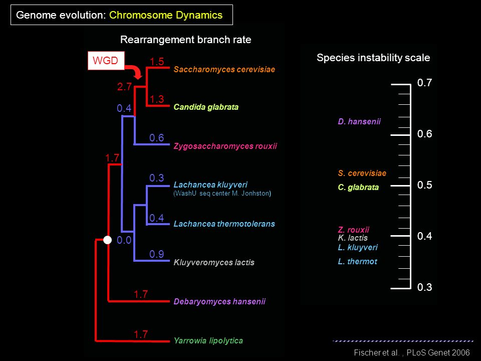 Genome evolution: Chromosome Dynamics