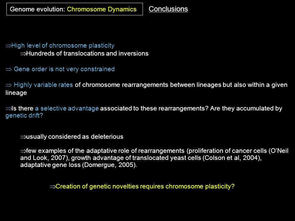 Conclusions Genome evolution: Chromosome Dynamics