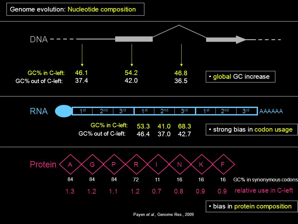 DNA RNA Protein Genome evolution: Nucleotide composition 46.1 37.4