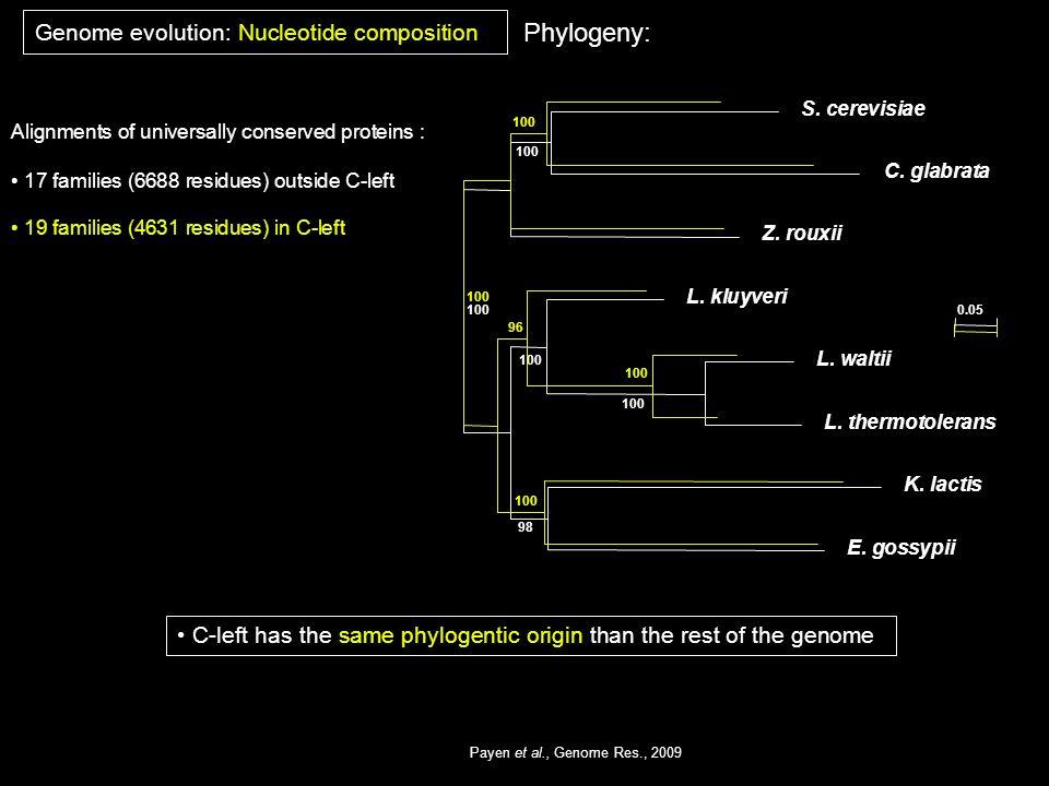 Phylogeny: Genome evolution: Nucleotide composition