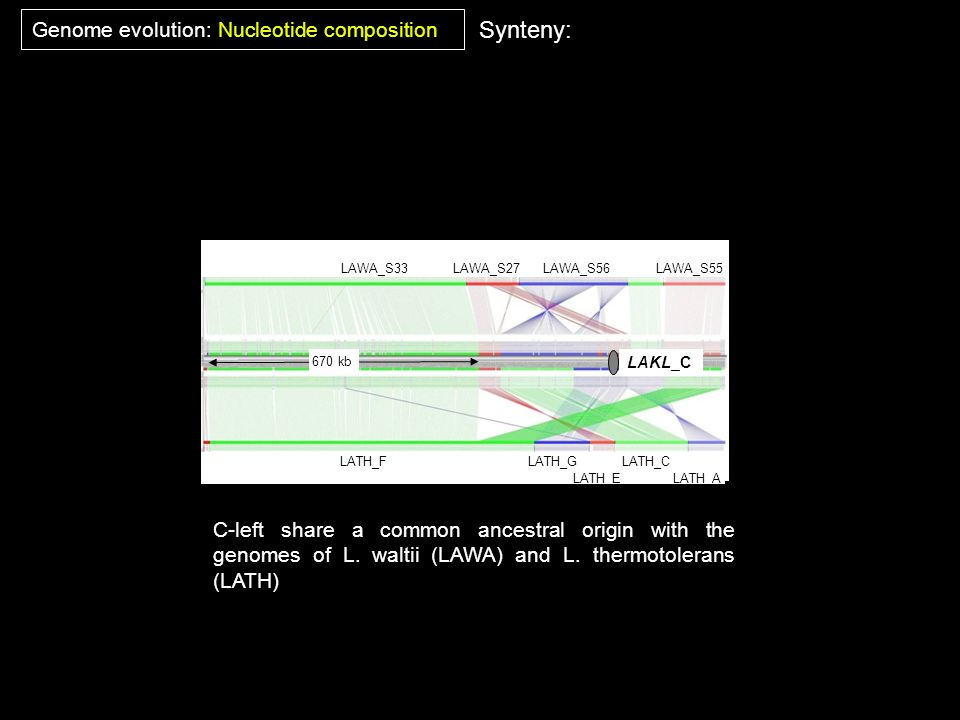 Synteny: Genome evolution: Nucleotide composition