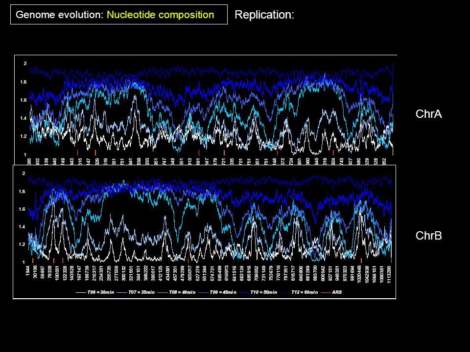 Genome evolution: Nucleotide composition