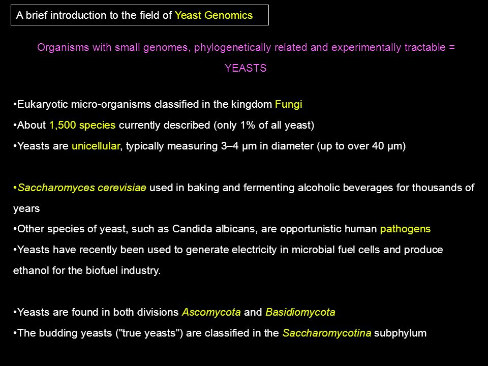 A brief introduction to the field of Yeast Genomics