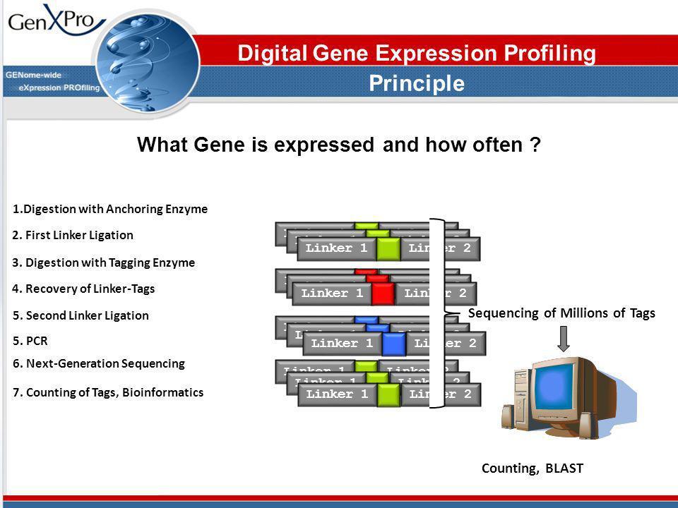 Digital Gene Expression Profiling Principle