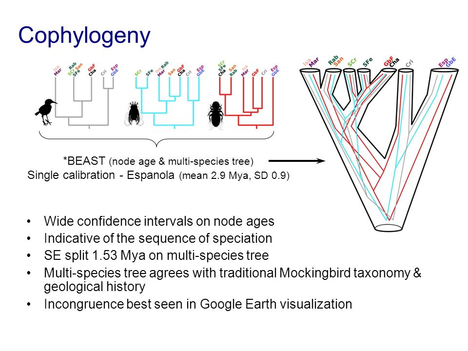 Cophylogeny Wide confidence intervals on node ages