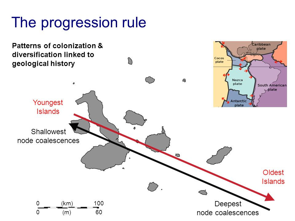 The progression rule Patterns of colonization & diversification linked to geological history. Youngest.