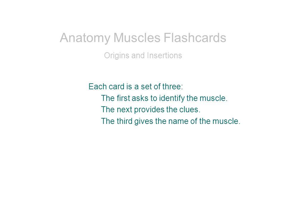Ziemlich Mosby Anatomie Und Physiologie Flash Karten Zeitgenössisch ...
