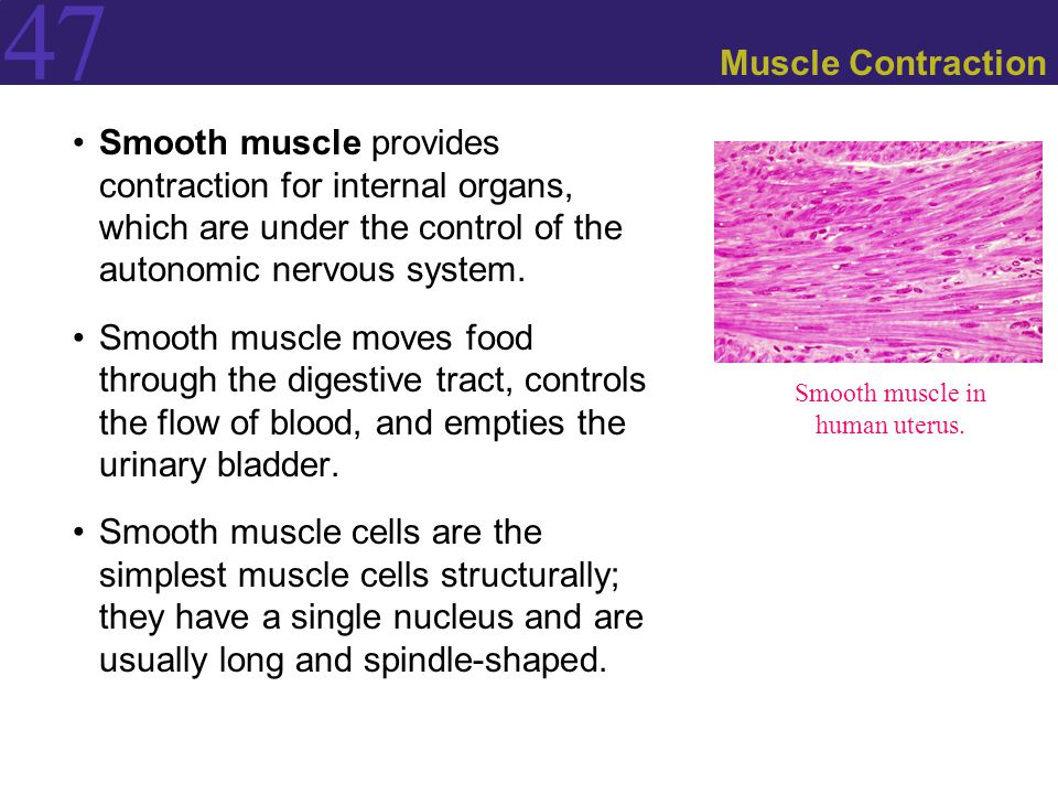 effectors: making animals move - ppt download, Muscles