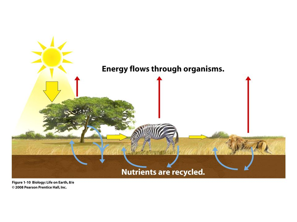 Biology life on earth lecture for chapter 1 ppt video online figure 1 10 the flow of energy and the recycling of nutrients fandeluxe Image collections