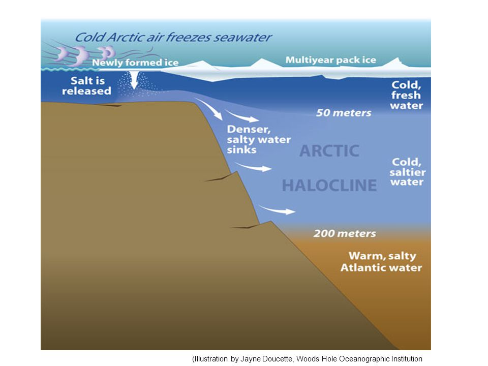 Ice formation causes salty dense water to sink at the poles – temperature and salinity driven