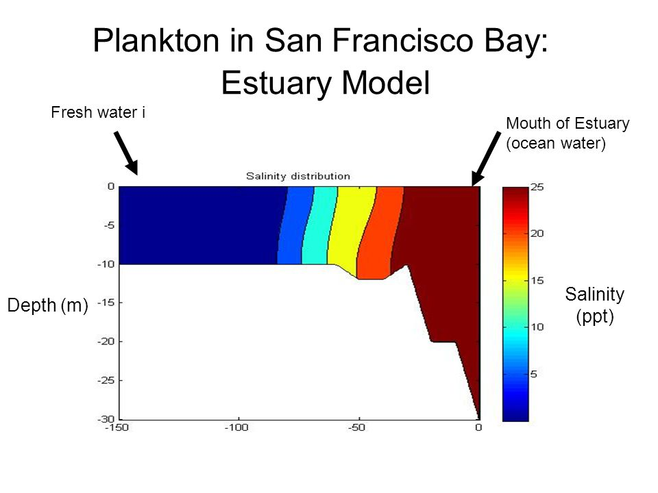 Plankton in San Francisco Bay: Estuary Model