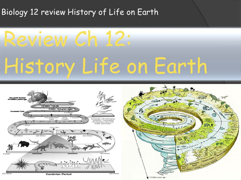 Biology Notes Life on Earth + Digestive System Essay