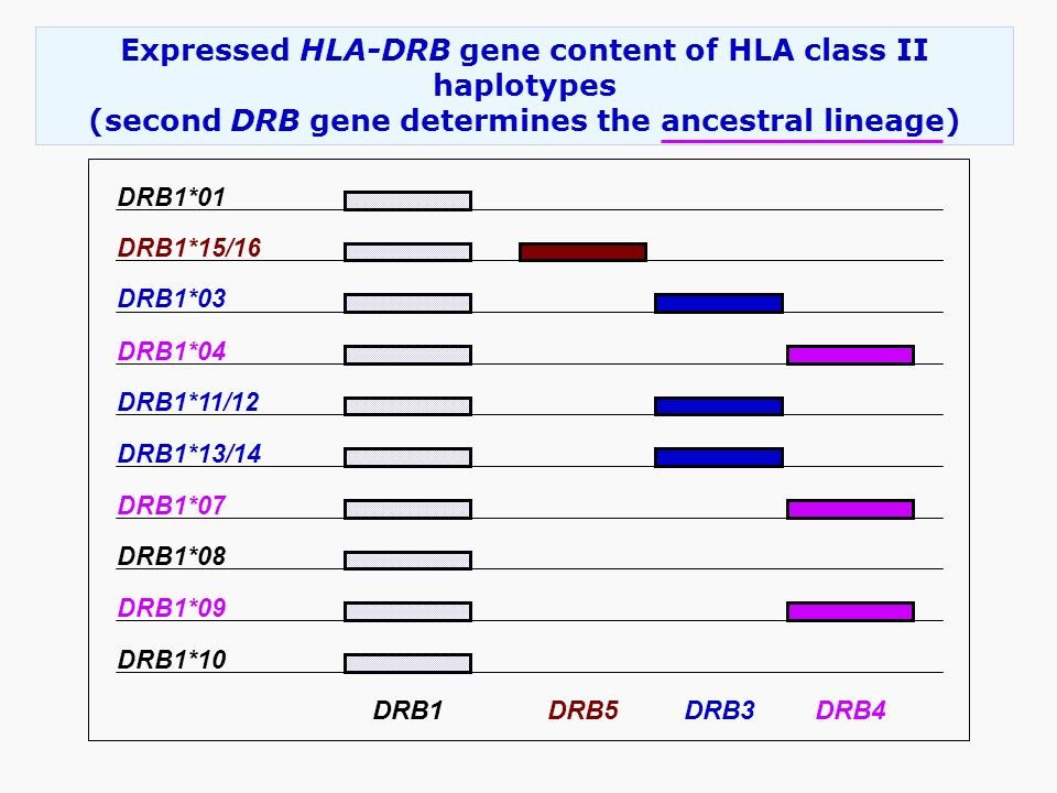 Expressed HLA-DRB gene content of HLA class II haplotypes