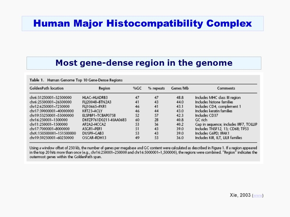 Most gene-dense region in the genome