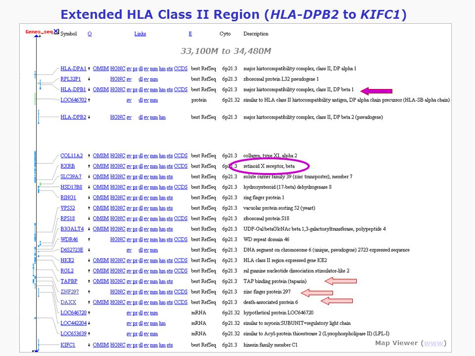 Extended HLA Class II Region (HLA-DPB2 to KIFC1)
