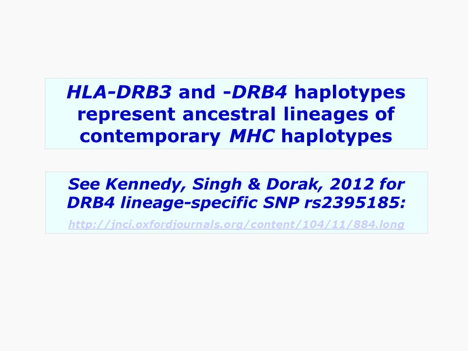HLA-DRB3 and -DRB4 haplotypes represent ancestral lineages of contemporary MHC haplotypes