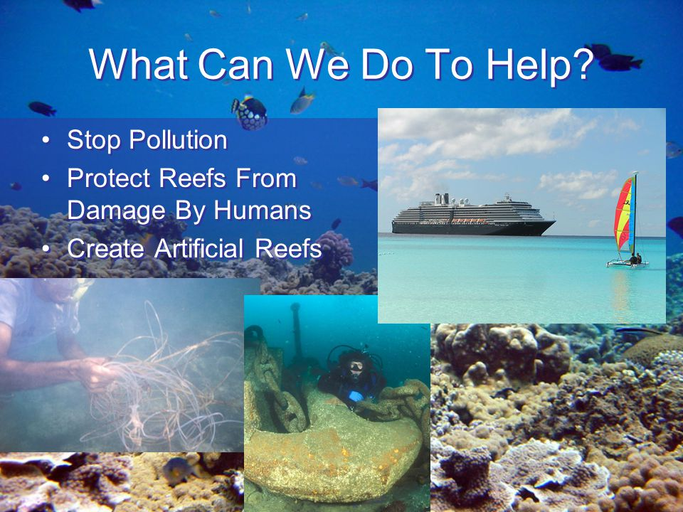 coral reef pollution can hurt bermudas Introduction sewage pollution of coral reefs has been recognized  ance  ranges could be detrimental to coral growth and survival.