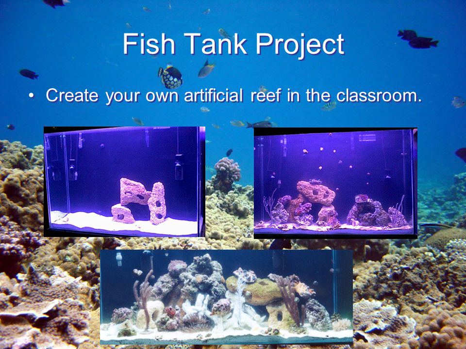 Coral reefs of costa rica ppt video online download for Create your own fish