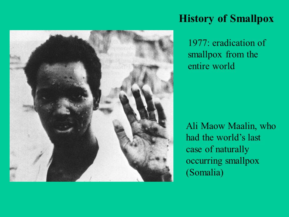 history and eradication of smallpox essay Questions about smallpox and acam2000 questions about smallpox and acam2000 skip to main page content  a vaccine used in the global eradication.