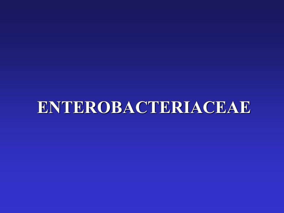 O Antigen ENTEROBACTERIACEAE. - ...