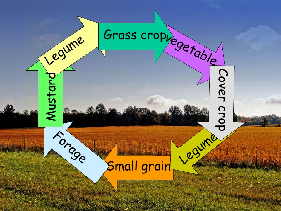 Grass crop Legume vegetable Mustard Cover crop Legume Forage Small grain