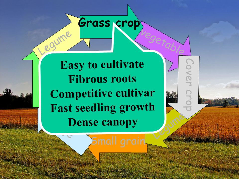 Grass crop Easy to cultivate Fibrous roots Competitive cultivar