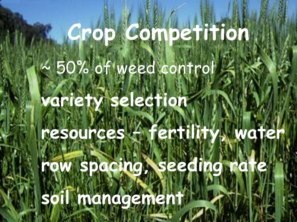 Crop Competition ~ 50% of weed control variety selection