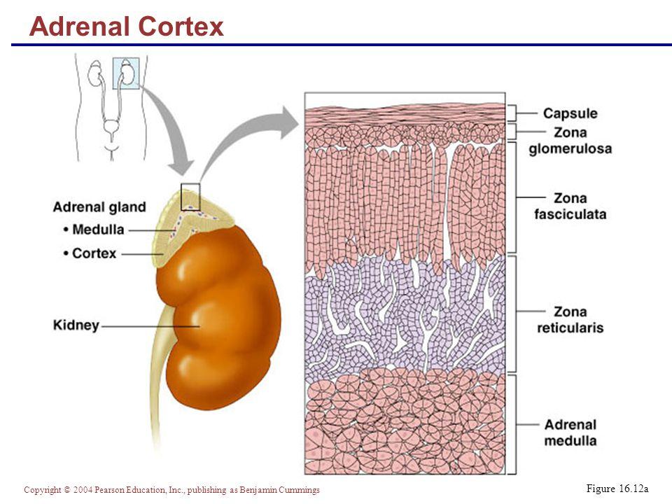 stress reducing steroid hormones