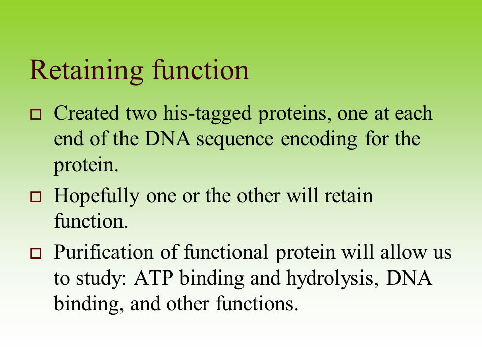 a study of proteins and their functions How we study cells-microscope-cell fractionation most cells are between  -function = protein synthesis-prokaryotes = 70s eukaryotes = 80s 30 eukaryotes (80sribosome): large subunit .