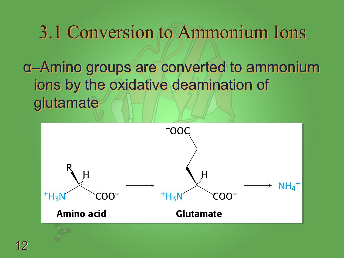3.1 Conversion to Ammonium Ions