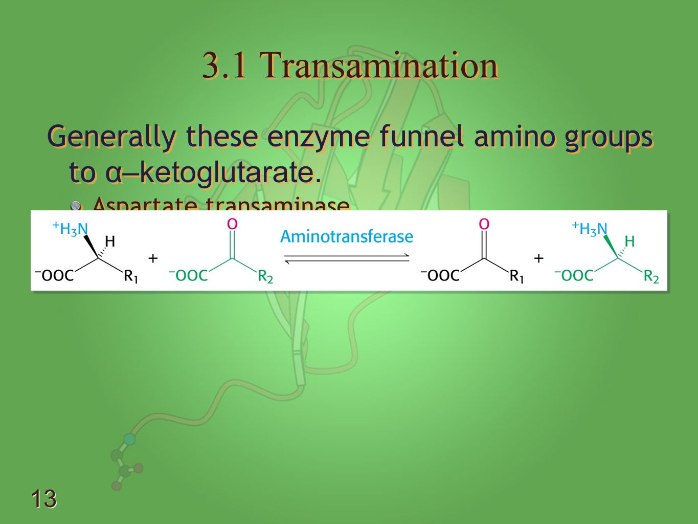 3.1 Transamination Generally these enzyme funnel amino groups to α–ketoglutarate. Aspartate transaminase.