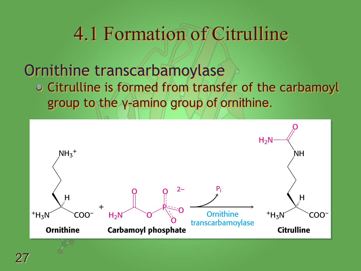 4.1 Formation of Citrulline