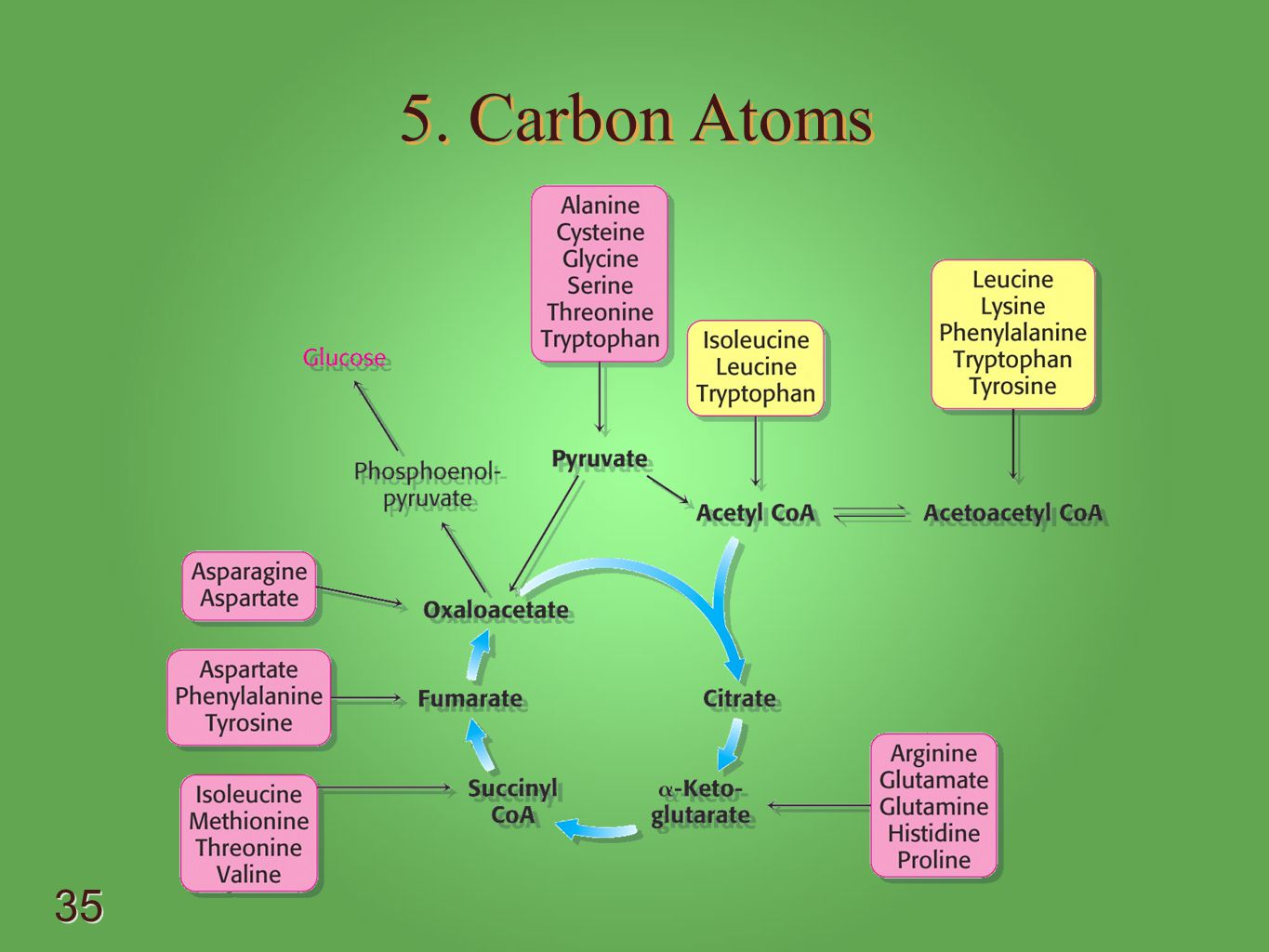 5. Carbon Atoms - Alanine -