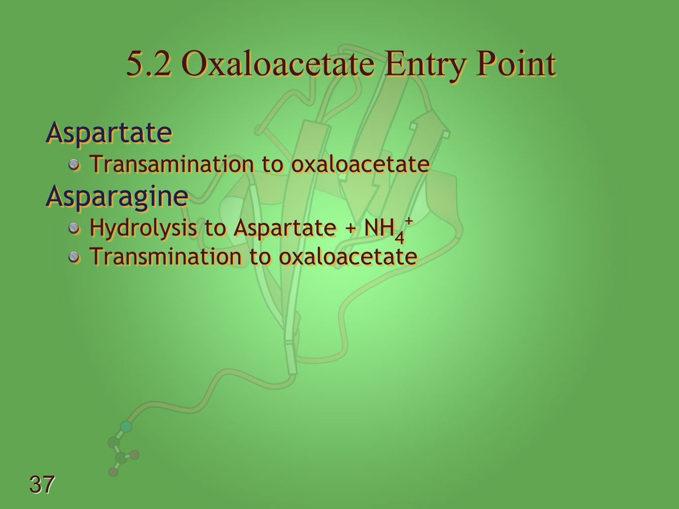 5.2 Oxaloacetate Entry Point