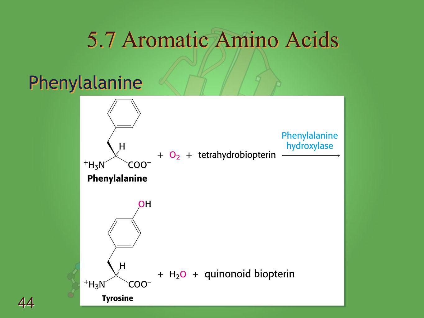 5.7 Aromatic Amino Acids Phenylalanine