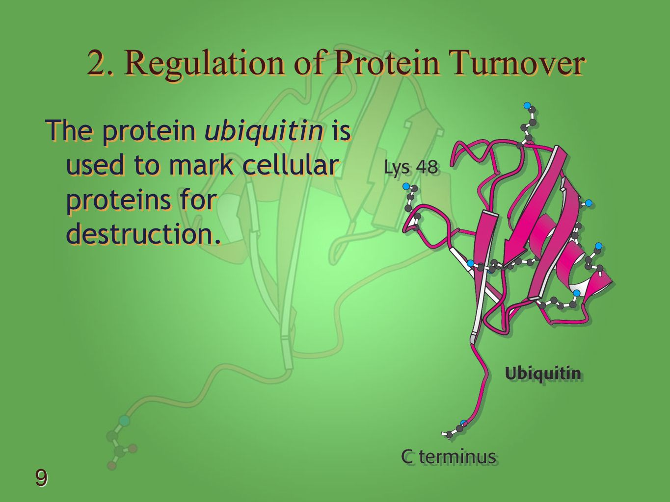 2. Regulation of Protein Turnover