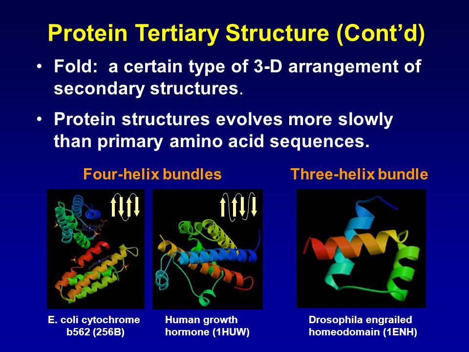 Protein Tertiary Structure (Cont'd)