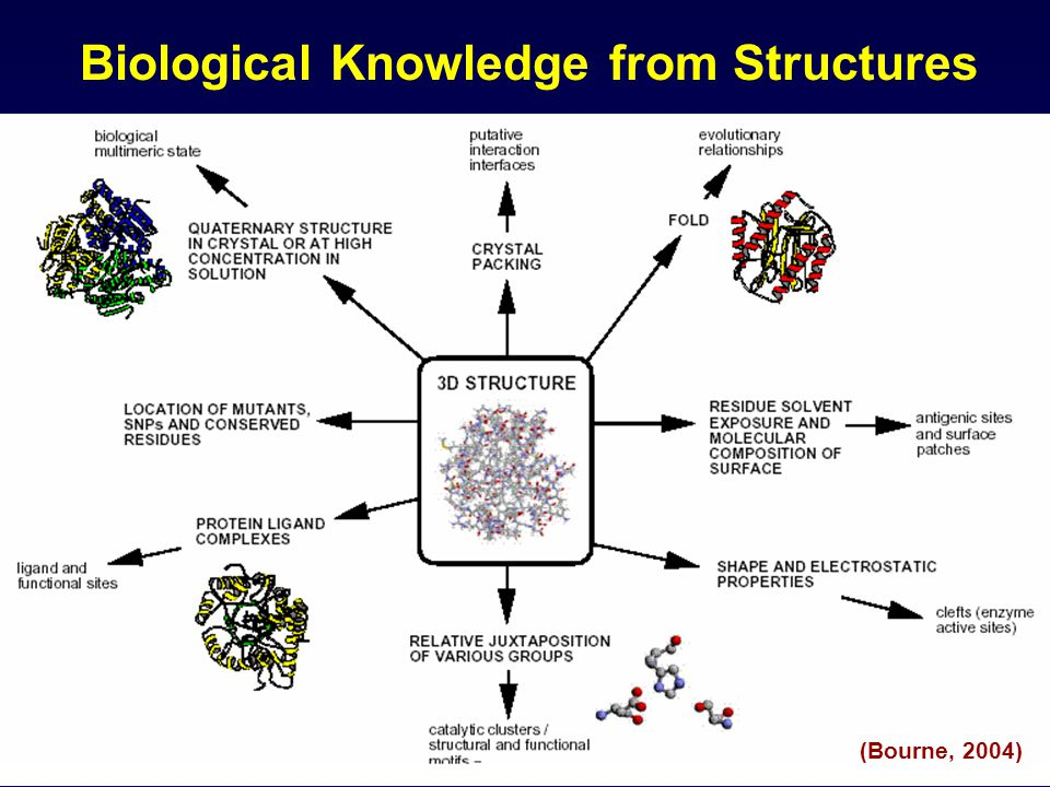 Biological Knowledge from Structures