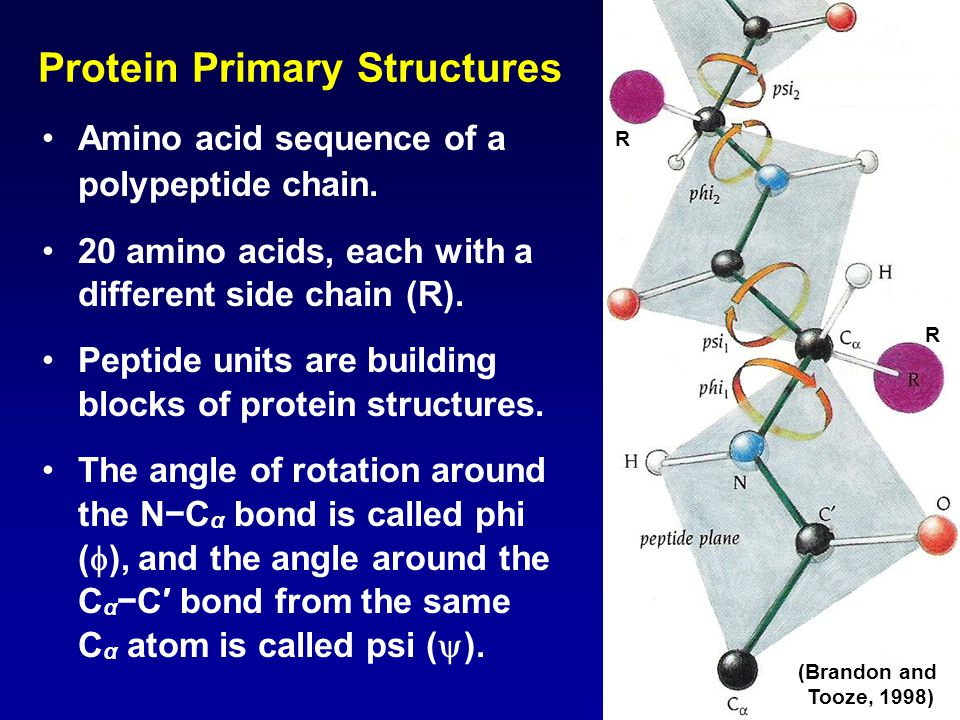 Protein Primary Structures