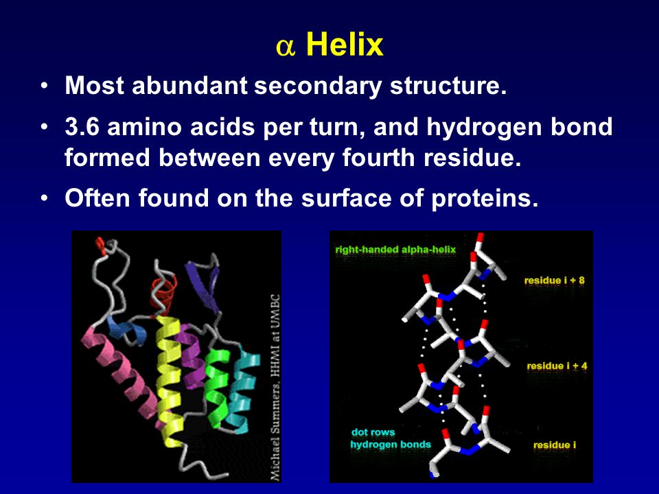  Helix Most abundant secondary structure.
