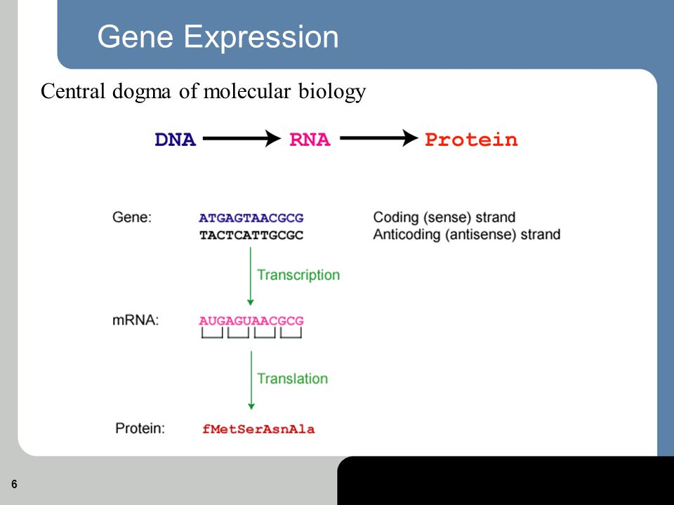 Gene Expression Essentials