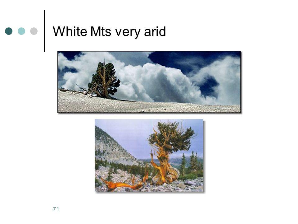 White Mts very arid