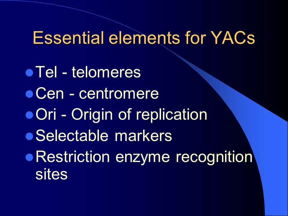 Essential elements for YACs