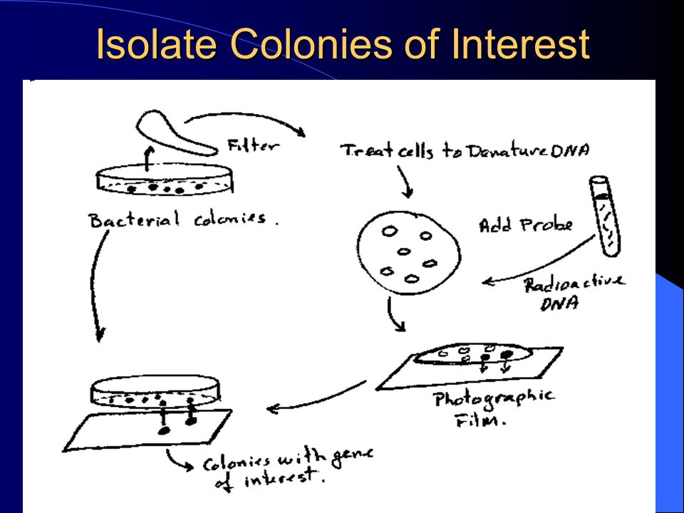 Isolate Colonies of Interest